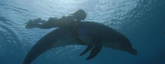swim with a dolphin experience tour on moorea island