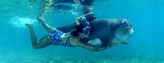 swim with dolphin experience hotel moorea package with intercontinental hotels