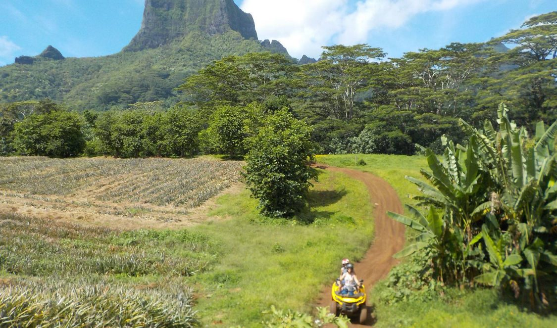 discover moorea mountains and pineapple field during quad tour in Moorea French Polynesia
