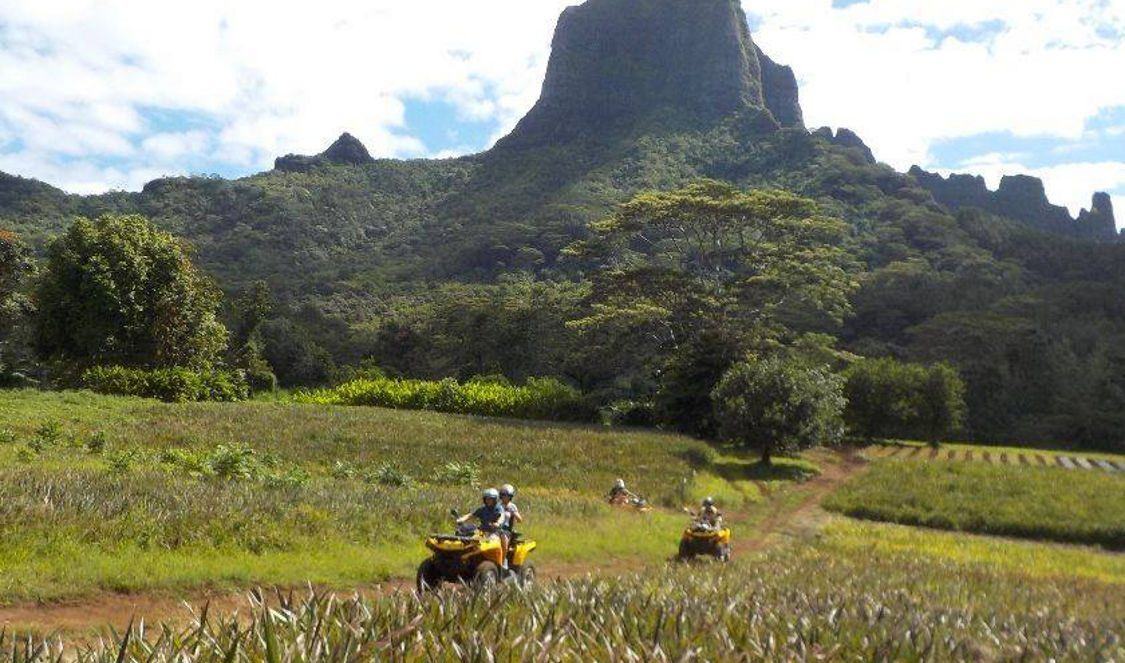 crossing pineapple fiels during atv tour in Moorea French Polynesia