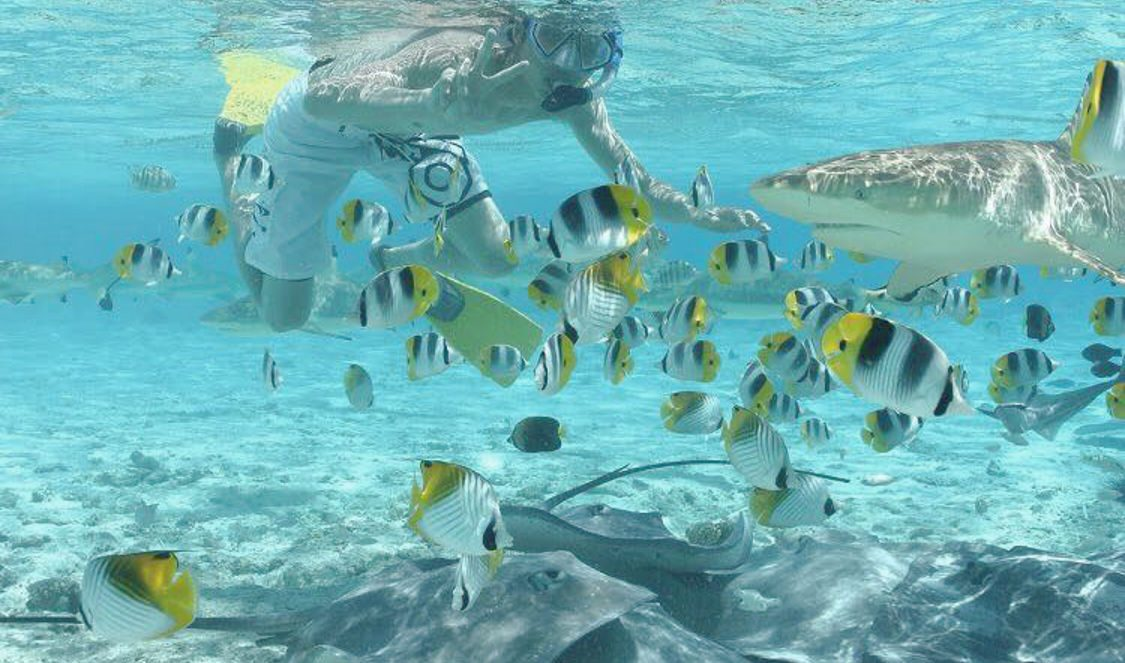 snorkeling with small sharks and rays in bora bora during your holiday