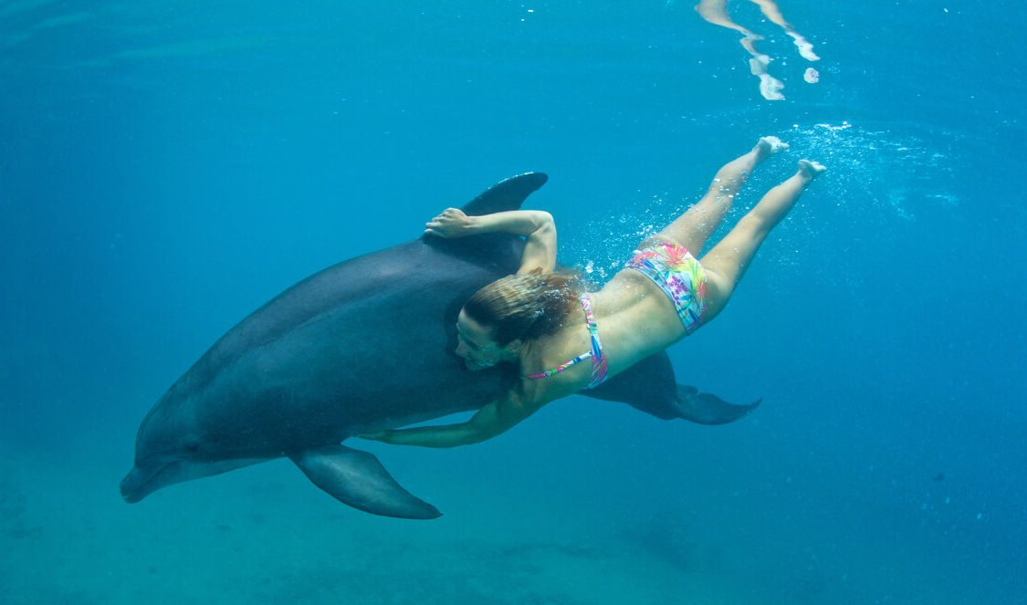 swim with a dolphin at dolphin center during a moorea vacation moana program