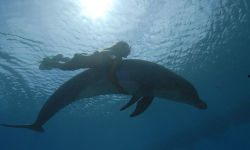 swim with dolphins in moorea island