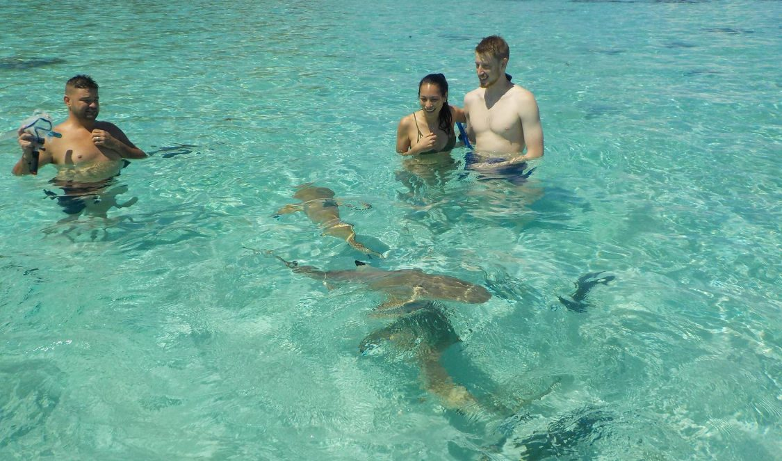 swim with sharks at jetski tour in moorea during your holiday