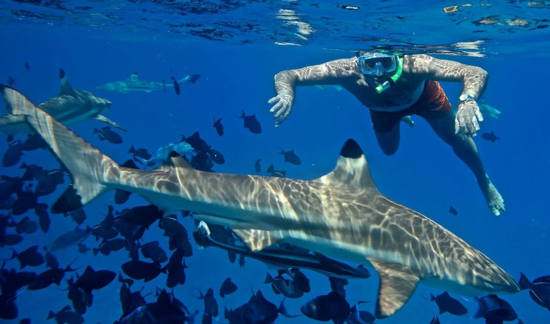 tour to swim with small sharks in bora bora during your vacation